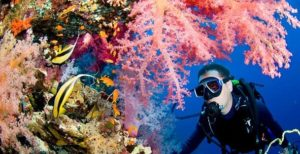 Reef Scene With Butterfly Fish And Diver